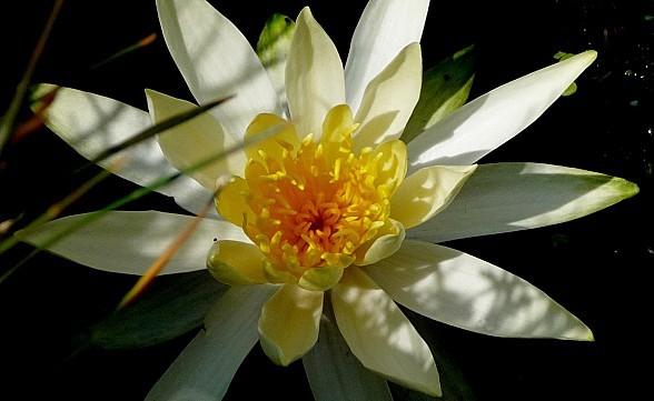 fleurs1.06-156.JPG