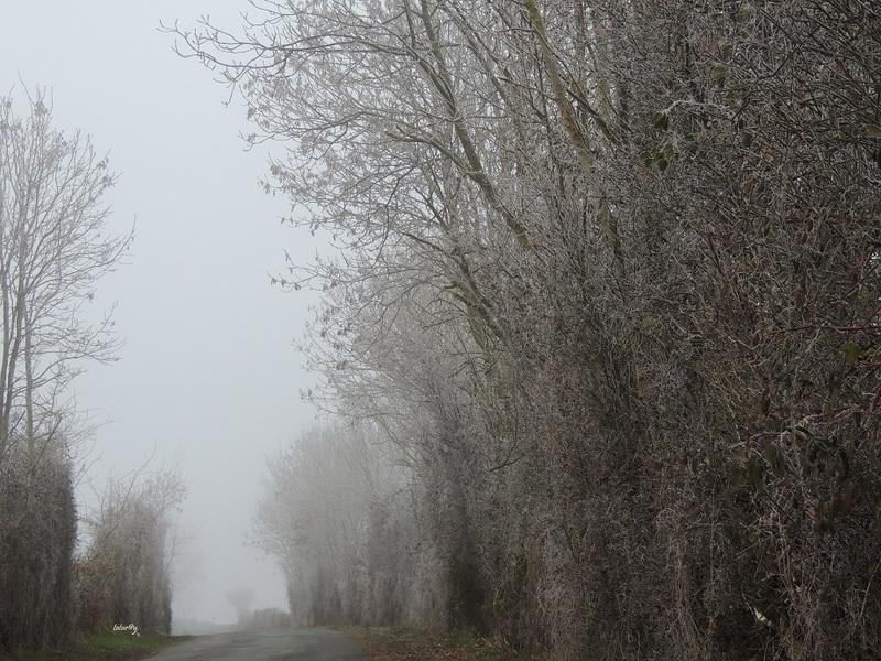 Givre et Brouillard.