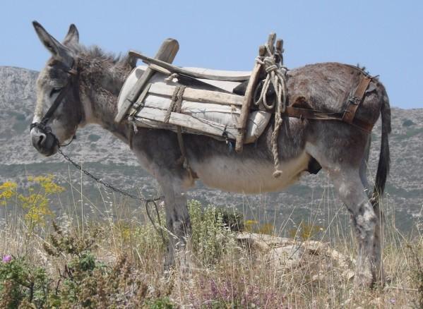 Une belle leçon de vie, donnée par un âne...