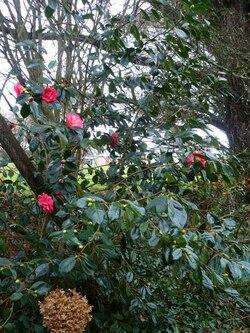 Février dans mon jardin