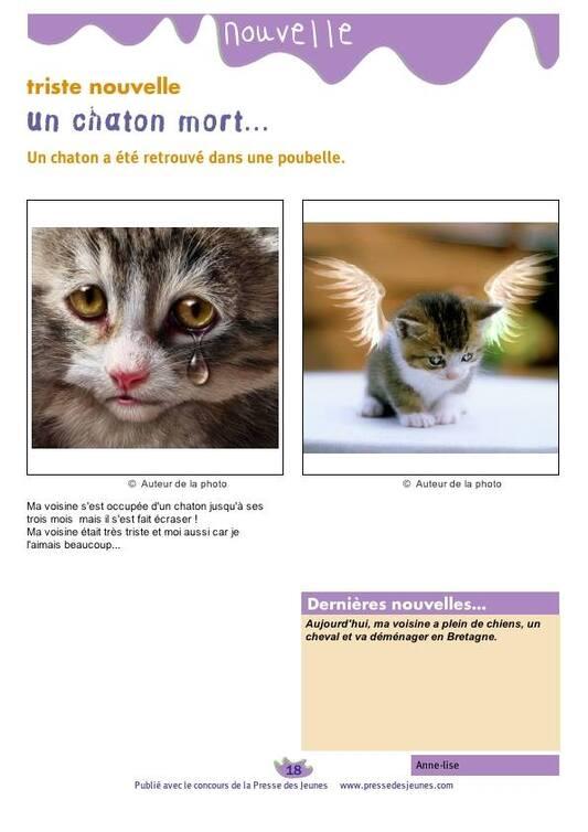 L'image contient peut-être: chat et texte