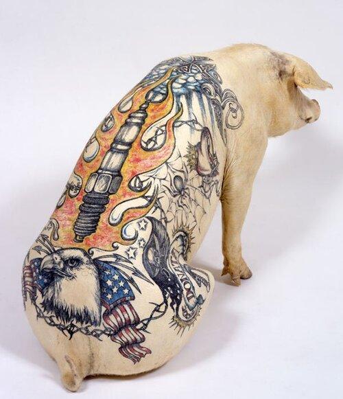 Cochons tatoués de Delvoye