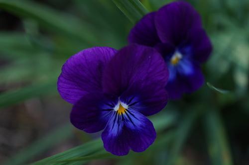 Le bleu dans le jardin de Patou