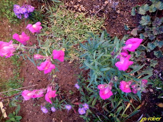 Ses quelques fleurs avant le changement d'horaire hivernal ce dimanche