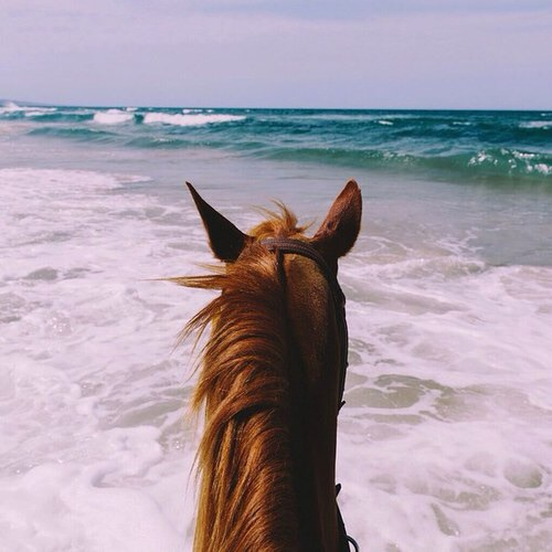 Image de beach, horse, and beautiful