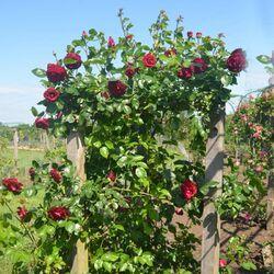Bordeaux parc floral 8 mai