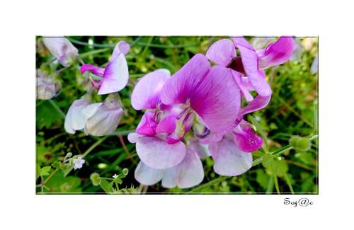 journée fleurie du 9 juin