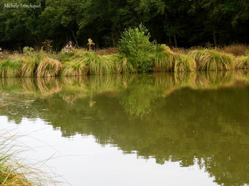 Une balade aux Lacs d'Halco à HAGETMAU (40), le 9 septembre...(suite)....