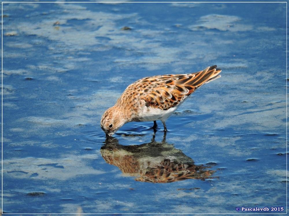 Printemps 2015 à la réserve ornitho du Teich - 6/13