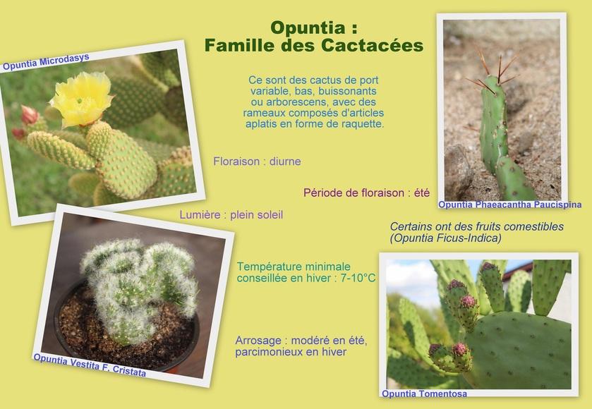Opuntia - Culture et Entretien