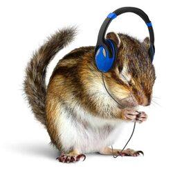 quelques mots écureuil music