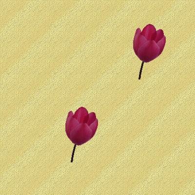 Fonds de blog Tulipes et Roses