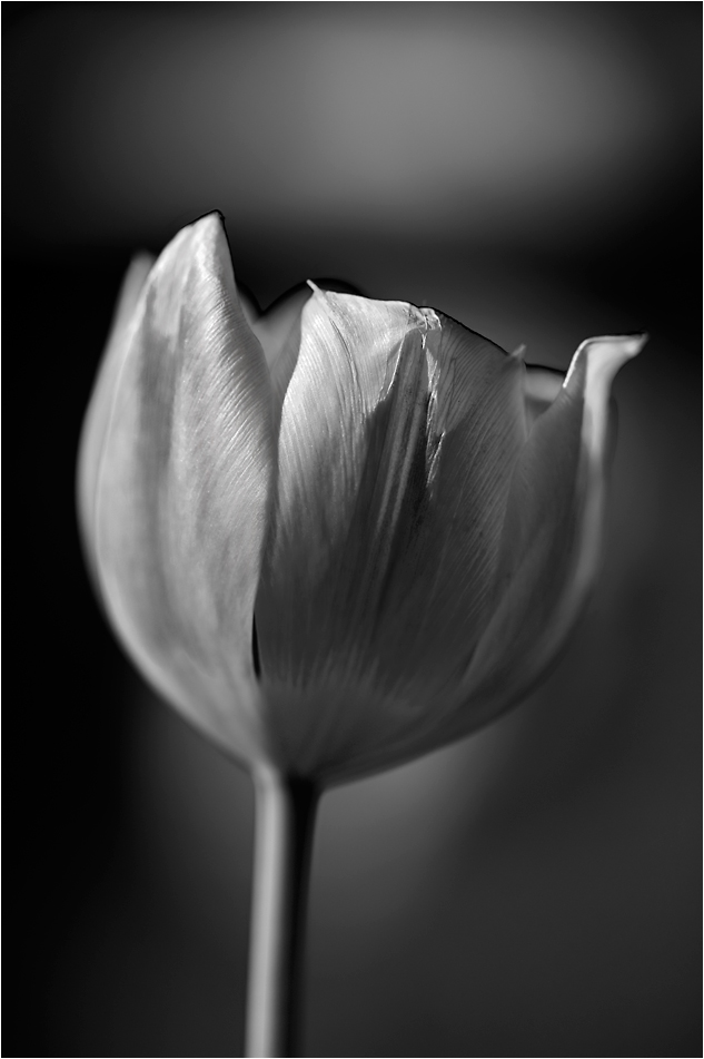 Fleurs images noir et blanc Fleur noir et blanc