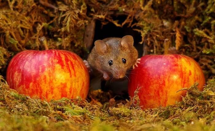 Le photographe construit un petit village pour une adorable famille de souris vivant dans son jardin Par Sara Barnes