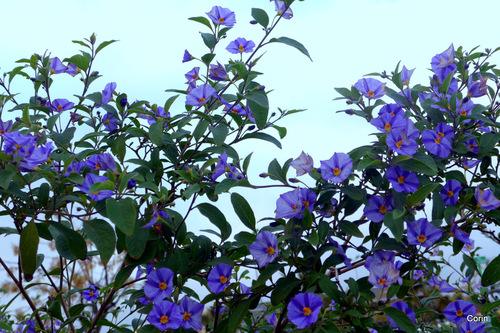 Ces fleurs vues en octobre dernier!