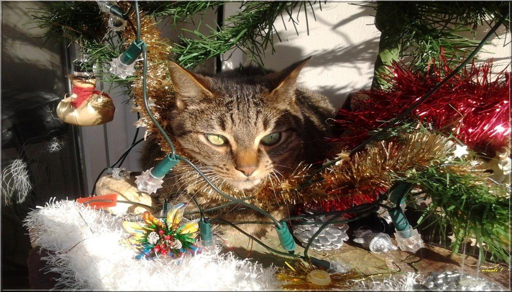 Avant Noël ...
