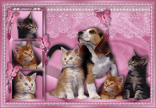 *** Chatons tendresse ***