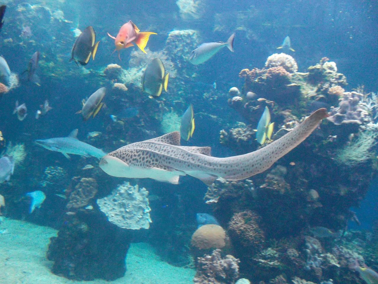requin dans nemo