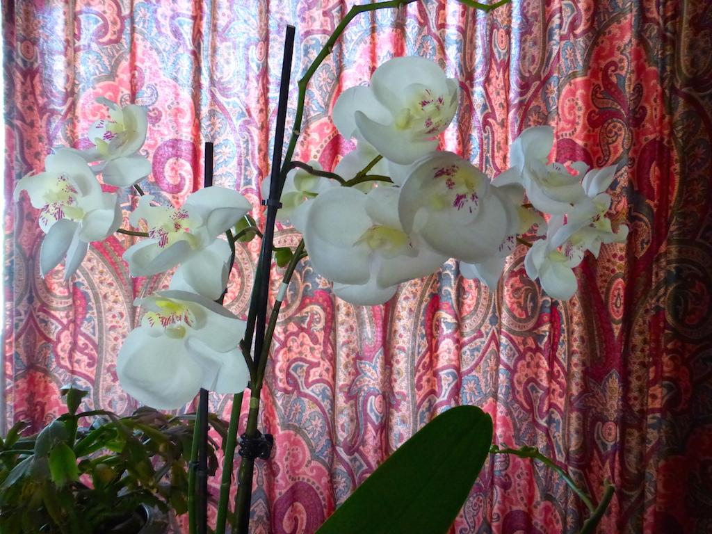 Les fleurs blanches au fil des saisons!