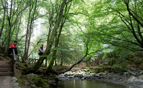 Tollymore forest et fin