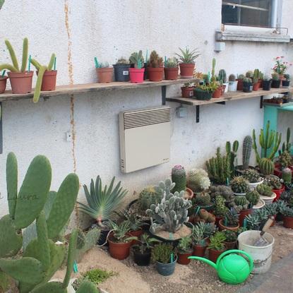 6 septembre 2015 - Cactus et succulentes dans la nouvelle serre