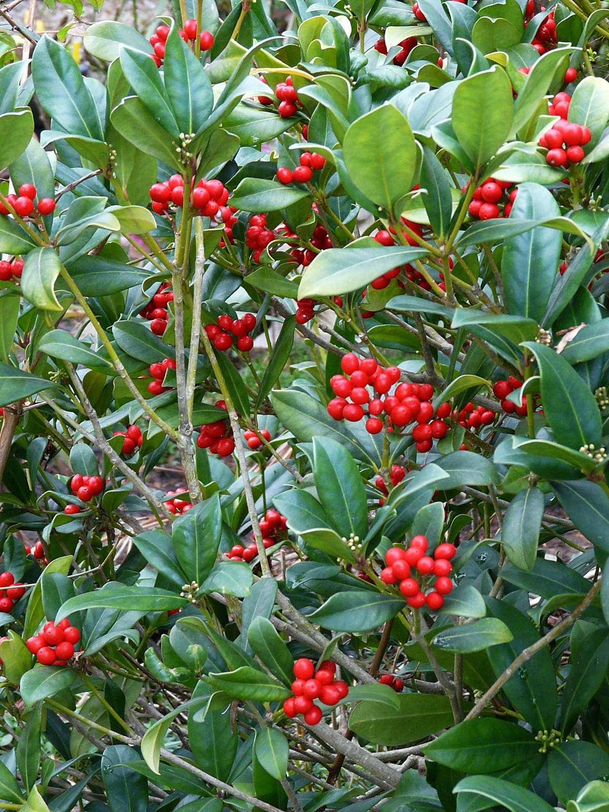 Jardin Japonais Hasselt Aulnay Sous Bois 2338