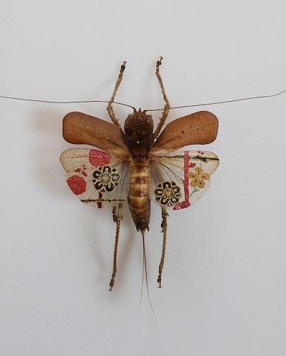 L'art du coléoptère ...