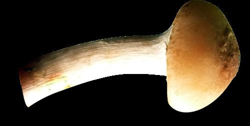 Champignons 3
