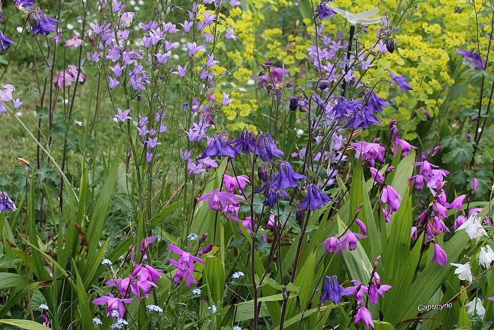 En mode confinement-12 : le jardin bouquet