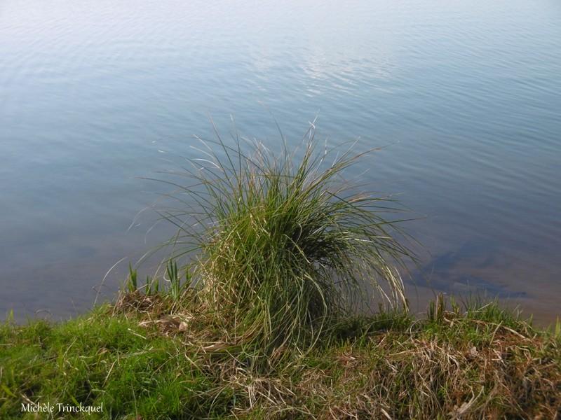 Une balade à la Pointe des Vergnes à SOUSTONS (40), le 5 février (suite n°2 et fin)...