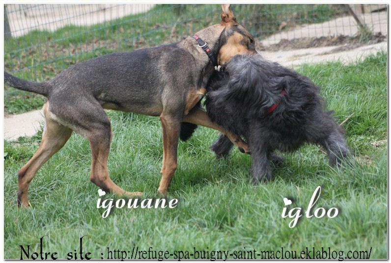 Igloo, Igouane ...