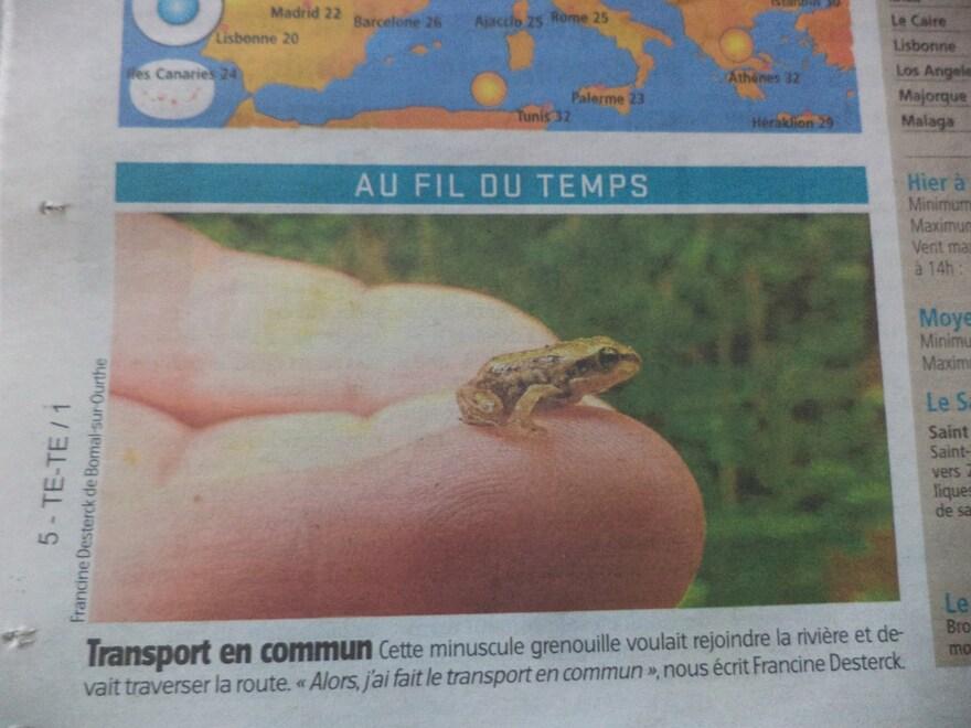 Et 77, ma petite grenouille dans le journal