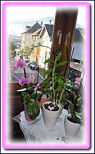 orchidees-martine-4.jpeg