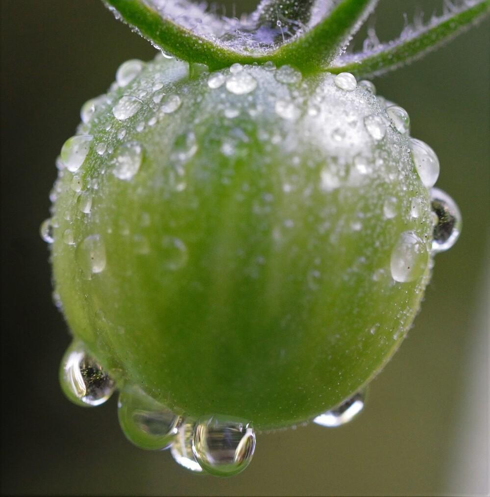 Quleqques petites perles de pluie