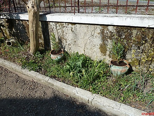 jardin (3)-border