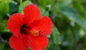 """Samedi 19 mars 2016:Atelier botanique """"Je fabrique mon Herbier de plantes africaines"""""""