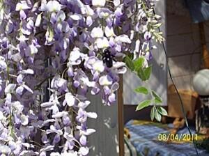 Plante-2011-IV-08---4002-Bourdon-2.JPG