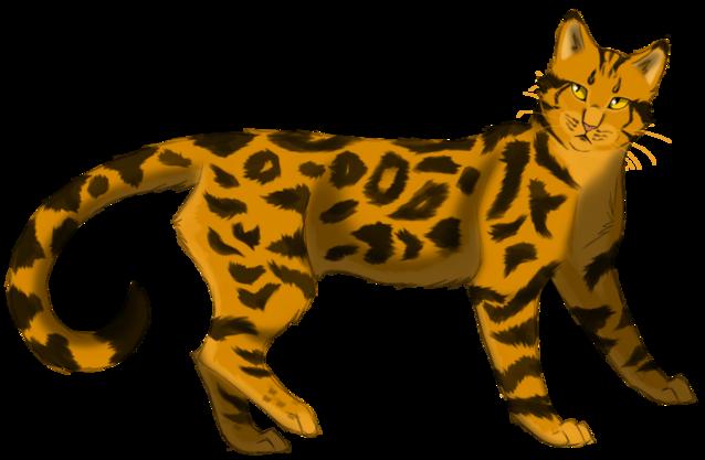 """Résultat de recherche d'images pour """"lgdc etoile de leopard"""""""