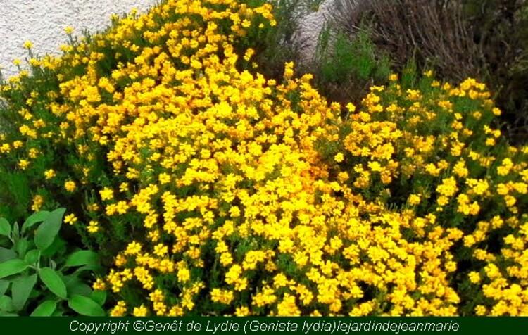 reconnaissance des vègètaux (les plantes qui aiment  les terrains secs,et les sols pauvres