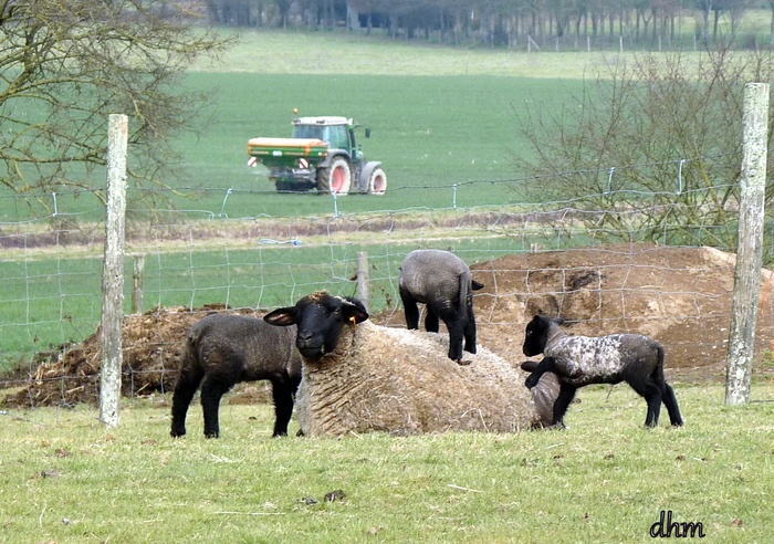 Les agneaux de Pâques