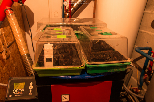Vue d'un peu plus près, pour le moment cette première série compte 70 pots + une caissette entière pleine
