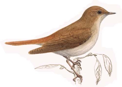 Oiseaux de printemps
