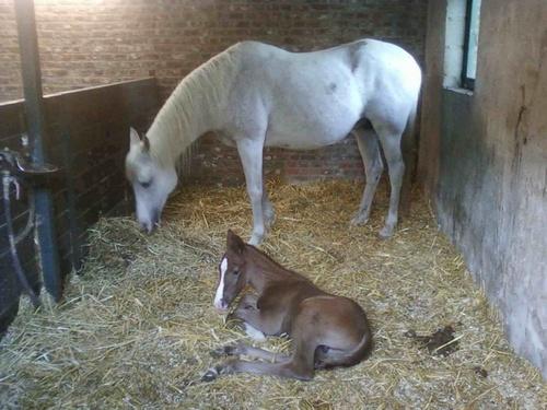 Marabou est né ce 27 avril