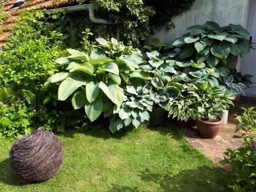 Rendez-vous au jardin
