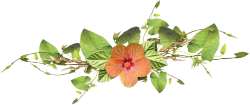 Vertus des Plantes médicinales : ASPERGE