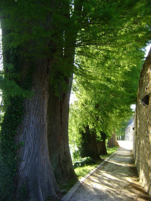 L'arbre et le non-arbre