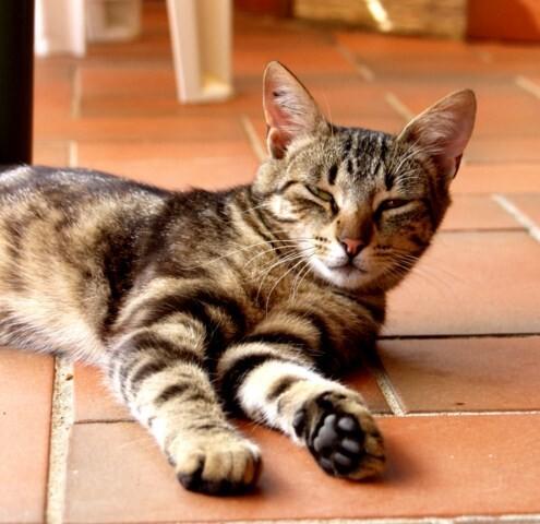 1-CAT-SCHANNA-Sol-terrasse.JPG