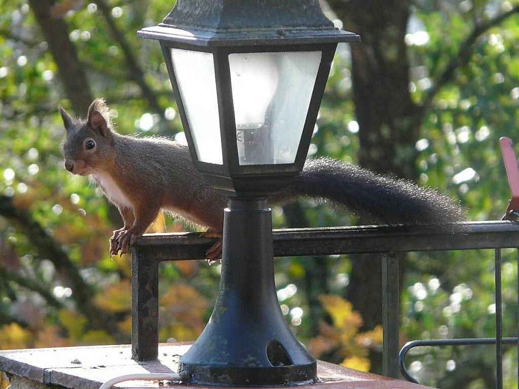 Ecureuil sur lampe 03