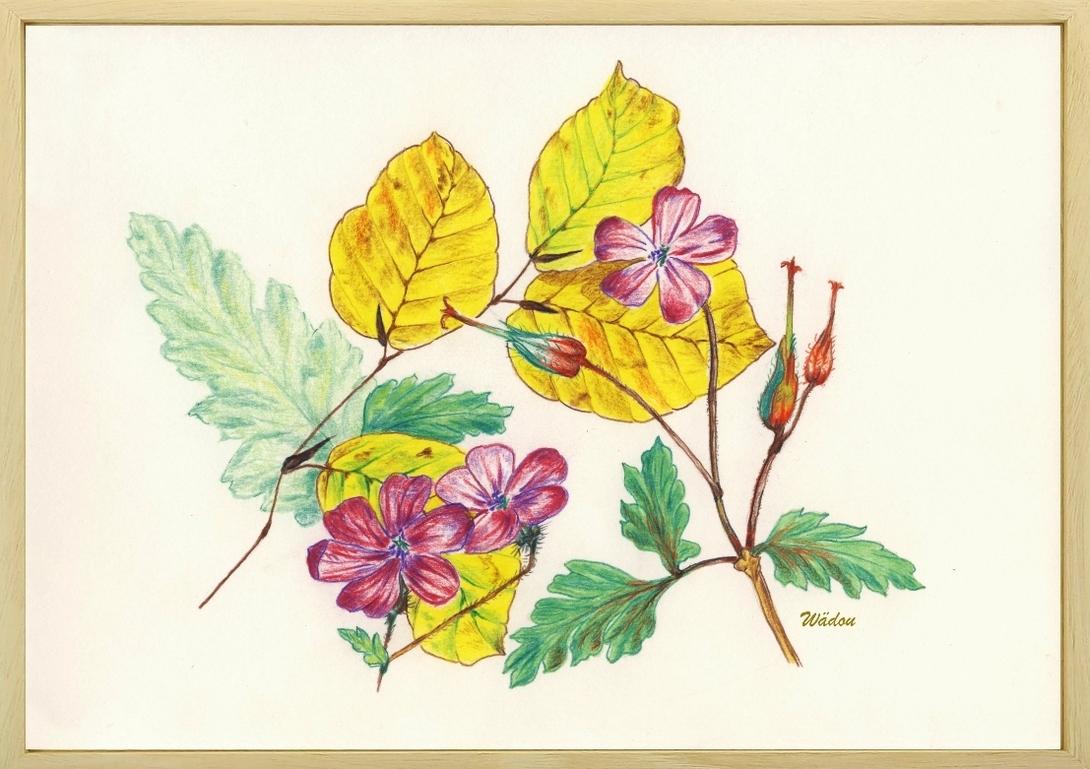 """Dessin aux crayons de couleur,  clin d'œil sur """"Géranium Herbe à Robert en automne"""""""