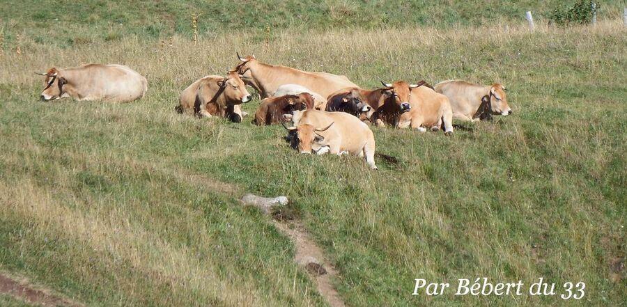 L'Aubrac - la rando nature du Déroc (2)